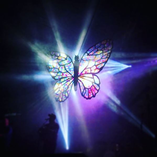 ciy butterfly